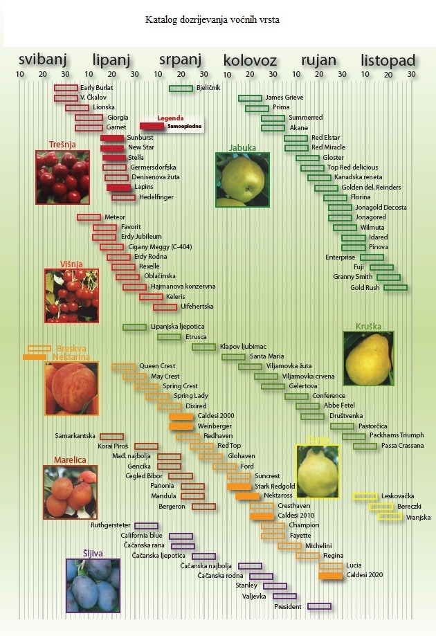 kalendar dozrijevanja voćnih vrsta